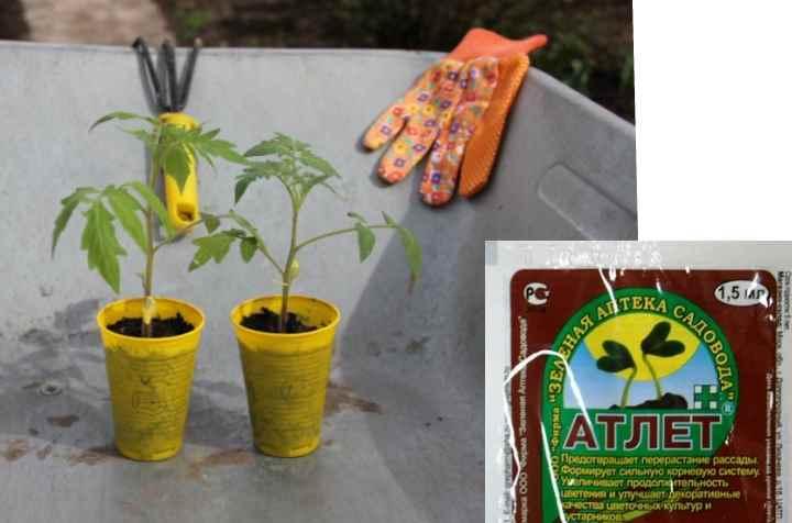 корневую подкормку, когда появляется первый семядольный лист;