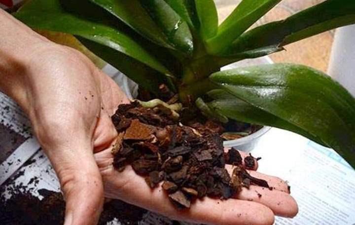 В цветочных магазинах достаточно просто купить готовый грунт для орхидей, но иногда он может не подойти из-за определенных условий:
