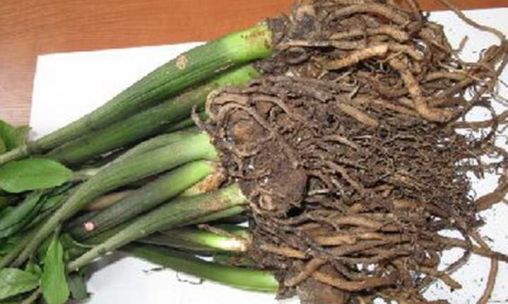 Карантин необходим для того, что бы убедиться в здоровье растения и в отсутствии вредителей