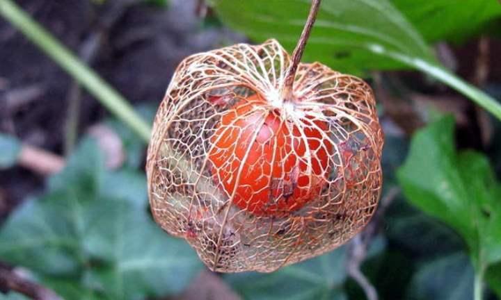 К посеву следует приступить с середины и до конца весны