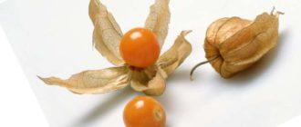 Выращивание из семян физалиса рассады гарантирует более раннее плодоношение