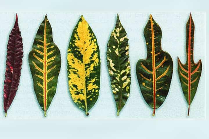 Подкормки вносят в активный период роста, с весны до осени, с интервалом 1 р. в 14 дней.