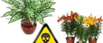 Своими токсичными свойствами, они могут нанести вред человеку или домашнему животному.