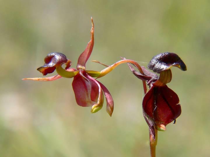 сон с орхидеей весенней ночью