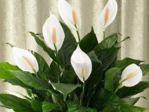 Эти растения и правда, похожи на камни. Литопсов существует множество видов, они отличаются по внешнему виду и цвету.