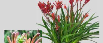 Самая занятная часть растения — это цветок