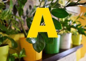 точным наименованием и с картинками будет помощником в поиске множества комнатных и садовых культур.
