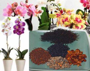 Посадка орхидеи должна производиться в стерильный грунт