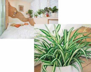 наиболее полезная культура для комнатного выращивания