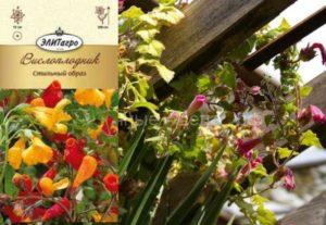Tresco Gold – имеет блестящие цветочки золотистого оттенка.