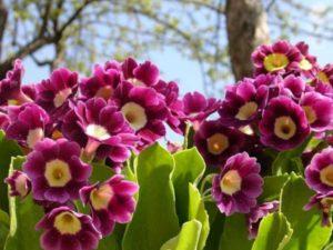 Самые ранние весенние цветы — когда зацветают, фотографии названия и описание