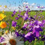 многолетнее цветущее растение, которое в простонародье