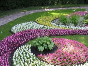 Ландшафтные цветы, их фото, название, описание