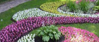 Полевица – хорошо растет на солнечных лужайках, имеет сочный, зеленый цвет.