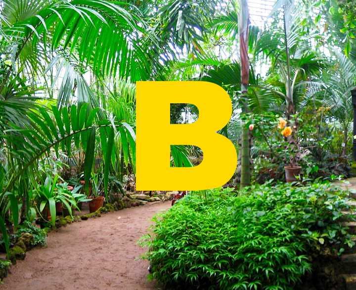 Декоративные разновидности выращивается для озеленения и украшения участка