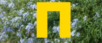 Среди всех существующих названий могут быть экзотические растения и те, которые отличаются легкостью выращивания.