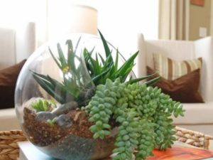 Идеально здесь будет выращивать фиалку, спатифиллум, каланхоэ или мирт.