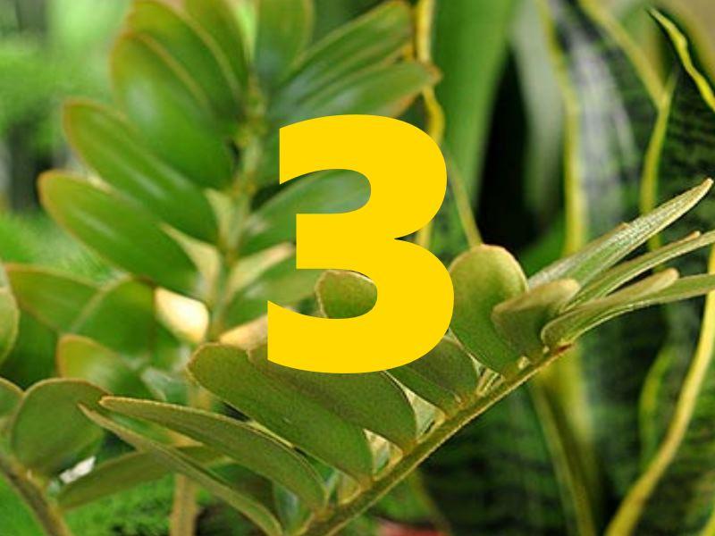 Все существующие в мире растительные культуры имеют несколько классификаций. Они относятся к таким категориям как цветы, кустарники, вечнозеленые и лиственные деревья. Также, в зависимости от разновидности это могут быть многолетние и однолетние растения.